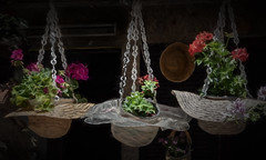 This is where I hang my hat(s) (Leaning Ladder) Tags: ohrid macedonia fyrom hat plants flowers canon 7dmkii leaningladder
