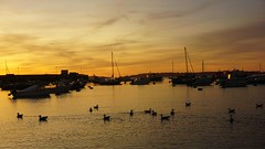 Gulls in the Harbour at Sunset (howard1916 - Something for everyone!) Tags: sunset sea gulls seagull water scillyisles boats bird sky bay boat