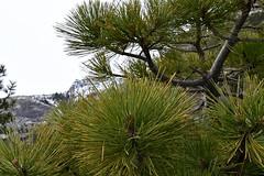 DEH_2614 (sobca) Tags: alpine california laketahoe laketahoebasinnationalforestlands nevada sierramountains emeraldbay