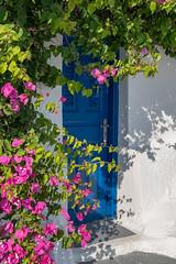 A9901221_s (AndiP66) Tags: bougainvillea blue white blau weiss blumen flowers santorini santorin thira thera greece griechenland cyclades kykladen caldera aussicht view juni june 2018 hellas ellada sony alpha sonyalpha 99markii 99ii 99m2 a99ii ilca99m2 slta99ii sigma sigma24105mmf4dghsmart sigma24105mm 24105mm art amount andreaspeters
