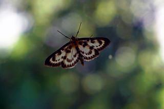 Butterfly on a windowpane