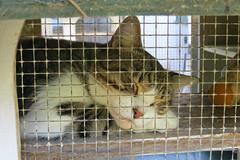 Key West (Florida) Trip 2017 7765Ri 4x6 (edgarandron - Busy!) Tags: florida keys floridakeys keywest cat cats kitty kitties cute feline hemingwayhome