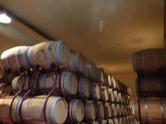 Cecchi wine tasting and tour - barrel room (ell brown) Tags: italy italia tuscany toscana cecchi localitàcasinadeiponti castellina chianti villacerna foresteriavillacerna winery winetasting wine wines stradaprovincialedicastellinainchianti vineyard barrel barrels barrelroom