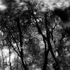 Trees In Water 135 (noahbw) Tags: captaindanielwrightwoods d5000 dof nikon abstract blackwhite blackandwhite blur branches bw depthoffield distortion forest landscape leaves monochrome natural noahbw reflection square summer trees water woods