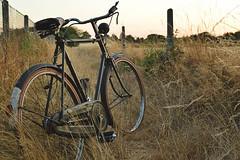 1952 Raleigh (Robin_cls) Tags: bike bicycle old vintage oldtimer wheels patina rust steel raleigh superbe dawn tourist europe belgium nikon brooks feeld nature dry sun