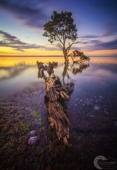 TWILIGHT AT TENBY TREE (Vaughan Laws Photography | www.lawsphotography.com) Tags: tree longexposure sunset twilight melbourne australia canon