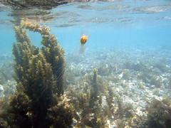 IMG_3560 (stevefenech) Tags: south pacific islands travel adventure stephen steve fenech fennock under underwater diving scuba