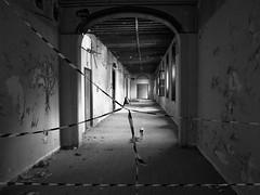 l'hôte des lieux (objet introuvable) Tags: blackandwhite bw noiretblanc nb urbex cat chat ombres lumière light shadow lumixgx8 urbanlife urban contrast lost monochrome
