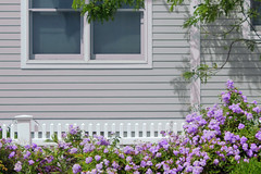 Beach cottage (tmattioni) Tags: lbi beachhaven house windows shrubs 7dwf anythinggoes monday roses hww