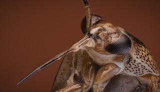 Pequeño insecto de apenas 3 mm