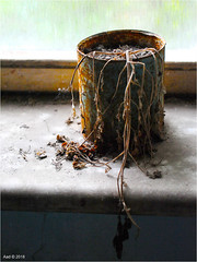 In the Pripyat Hospital (Aad P.) Tags: chernobyl чорнобиль pripyat припять ukraine україна sovietunion cccp nuclearpowerplant radioactivity radiation urbex urbexphotography exclusionzone hospital plant dry