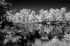 Wetlands IR 1 (Neal3K) Tags: henrycountyga georgia ir infraredcamera kolarivisionmodifiedcamera