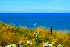 Petits bateaux (Mélanie.B.) Tags: paysage france normandie dieppe bateaux bleu fleur nikon tourisme d3300