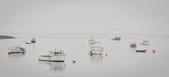 downeast (jtr27) Tags: dsc09373l jtr27 sony alpha nex6 nex emount mirrorless sigma 60mm f28 dn dna dnart sigmaart maine lobster boats mist fog downeast