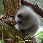 Do the Porcupine Shake thumbnail