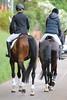 _MG_8316 (dreiwn) Tags: dressage pferd reitturnier turnierreiten pferdesport horse horseback horseriding equestrian reitverein dressurprüfung kandare doublebridle reiten pferde reitplatz ridingarena dressur dressuur