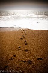 Step into the sea. (broadswordcallingdannyboy) Tags: dorset cogdenbeach beach sea seascape waves fun holiday springsun jurassiccoast eos7d 1740mm canonl leonreillyphotography england southcoast wideangle donotcopy