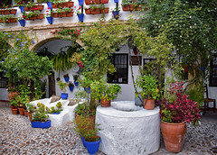 Patio Cordobes (Jocelyn777) Tags: patio courtyard plants flowers foliage stone cobblestones buildings architecture houses whitehouses historictowns historictowncentres cordoba andalucia spain travel patiocordobes