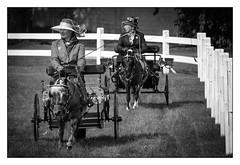 Columbus Carriage Festival (Rick Olsen) Tags: carriage horse fuji fujifilm xt2