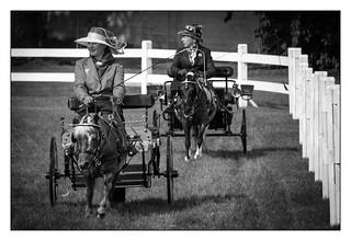 Columbus Carriage Festival