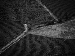 more than meets the eye (paddy_bb) Tags: olympusomd paddybb 2018 travel mft microfourthirds italy italia piemont italien piemonte monforted'alba vineyard barolo