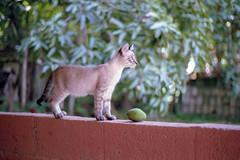 In memoriam (anechoic_photos) Tags: filme vista400 cat film color canoneos1n