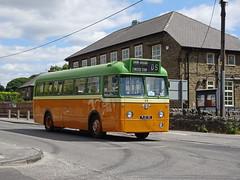 Halifax PJX35 Dove Holes (Guy Arab UF) Tags: preserved halifax corporation 35 pjx35 leyland leopard weymann bus dove holes derbyshire buses