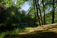 Elswout (Julysha) Tags: elswout trees pond july summer 2018 acr d850 nikkor247028 thenetherlands noordholland park shadow