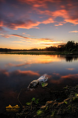 Circle of Life (erwin.delfin_photography) Tags: deerlakepark lake vancouver vancouverisawesome vancouvertourism vancity vancouvercanada beautifulbritishcolumbia beatifulvancouver beatifulbritishcolumbia bevancouver seascape landscape sunset fierysky reclections waterscape