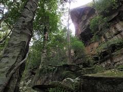 Strickland Falls Loop Trail (1.8km) (trailhikingaust) Tags: hikes newsouthwales trails walks