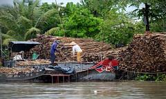 Wood Cutters (Mondmann) Tags: woodcutters wood trees mekongdelta vietnam southernvietnam asia southeastasia travel mondmann fujifilmxt10