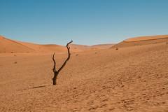 IMG_8576 (Tatjana_Schmid) Tags: namibia sossusvlei deadvlei wüste desert sand sanddunes dünen africa afrika landschaft landscape reise holiday urlaub travel