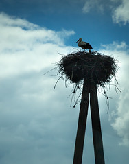 Stork and Nest (wjshawiii) Tags: nest romania stork storks transylvania