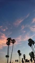 Summer Sunsets (//ZERO) Tags: sonyxperiaz5 sonyxperia sonye6683 e6683 xperiaz5 xperia androidphotography cellphotography cellphonecamera sunset cloudsstormssunsetssunrises summer summer2018 palmtrees palmtree missionbay sandiego california mobilephotography