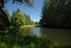 Godwin Biodiversity Reserve 8 (jvde) Tags: nikond200 surrey gimp