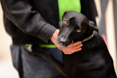 Vida [Explore Jun 19, 2018 #183] (k.jessen) Tags: vida cachorro dog camposelíseos fotojornadacamposelíseos fotojornada photowalk andrédouek sãopaulo saopaulo brasil brazil
