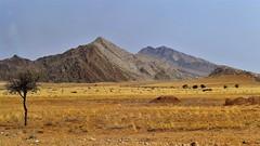 Farbschattierungen (marionkaminski) Tags: namibia africa afrika landschaft landscape paisaje paysage paesaggio berge mountain montanas montagnes baum tree arbre arbol savanne panasonic lumixfz1000 ngc