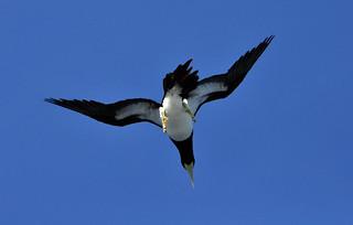_DSC0347 Sea bird
