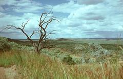 Gulf Country (Serendigity) Tags: australia countryside landscape deadtree queensland kodachrome 35mm slide film
