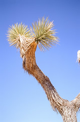 000000650020.jpg (gbrldz) Tags: joshuatree california leicam7 veliva100 leica slide 35mm m7