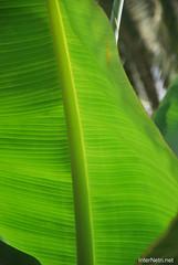 Канарський сад-город, Гомера, Канарські острови  InterNetri  0612