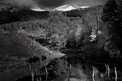 Lake Arcoiris (josemcalvol) Tags: lake blackwhite trees reflections water snow natparkconguillio chile araucania lakearcoiris ngc