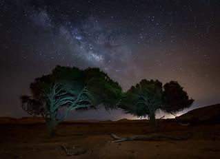 Trees at Night.