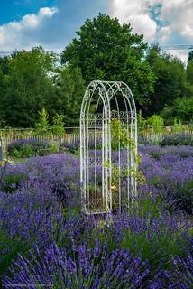 Climbing Frame in Lavender