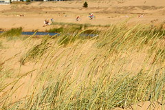 Windy afternoon... (irio.jyske) Tags: nature naturephoto naturepictures naturephotograph naturepic naturescape naturephotos naturephotographer naturepics natural lanscape landscape landscapephotographer landscapephotos lakescape landscapes landscapepics landscapepic landscapephotograph photograph photographer photos pic windy nice warm morning afternoon sand flying summer beach shore grass longgrass tourists playing