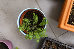 Garden in a pot ! (abhishesh_01) Tags: singapore