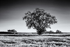 Collecting Energy... (Ody on the mount) Tags: abendlicht anlässe bäume em5ii fototour gegenlicht hdr himmel mzuiko6028 omd olympus pflanzen schwäbischealb bw monochrome sw