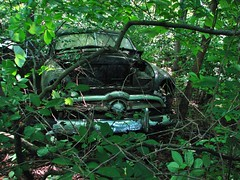 THE LONG AGO JUNKED 1949 FORD IN JUNE 2018 (richie 59) Tags: ulstercountyny ulstercounty newyorkstate newyork unitedstates fordmotorcompany ford trees 1949ford townofesopusny townofesopus abandoned richie59 stremyny stremy america outside monday summer weekday automobile auto motorvehicle vehicle car junkcar junked fordcoupe fomoco 2018 1949fordcoupe june2018 june252018 abandonedcar oldcar 2010s 1940scar american us cartwodoortwodoorcoupehudson valleymid hudson hudsonusausnynysny stateold fordold couperusty fordrustyrustedrustrusted outrusty carfadedfaded paint blackcar frontend grill chrome windshield overgrown