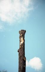 Naked (vvozone) Tags: istillshootfilm filmphotography analogphotography filmisnotdead contax portra400 kodak nature tree sky cloud skyporn cloudporn treeporn
