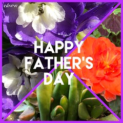 """HAPPY FATHER'S DAY (EDWW day_dae (esteemedhelga)™) Tags: garden nature season flower splants bloom botany nursery parks blossom perennial annual bud cluster floret efflorescence seedling biennial greenery bouquet posy rosette natura mothernature greatmotherdamenature"""" vegetation horticulture flora botanical juncture natural beauty creation siring passion sprout esteemedhelga edww daydae"""